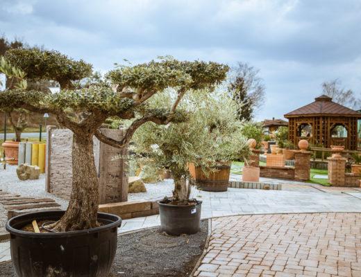 exoticke rastliny na zahradu
